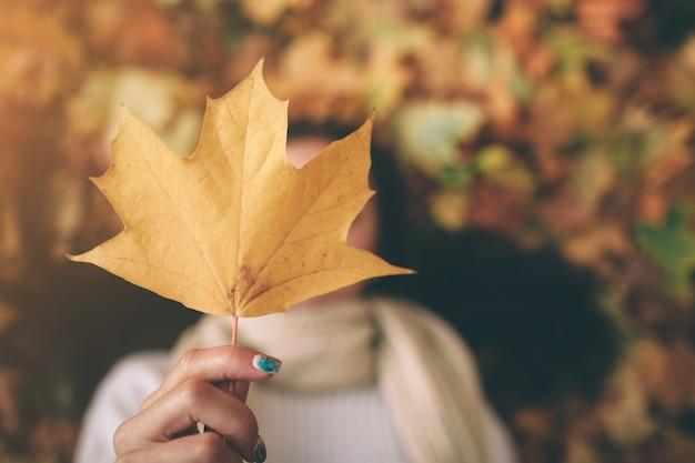가을 잎. 공원에서 단풍.