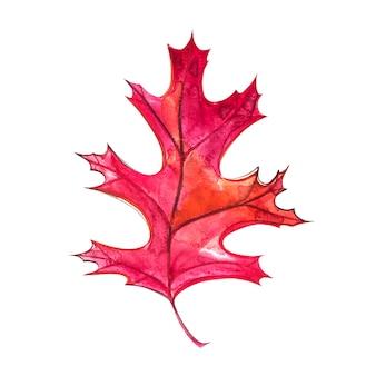 Осенний лист - черный дуб. осенний кленовый лист изолированы. акварельные иллюстрации