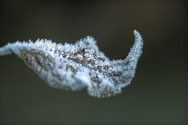 Foglia d'autunno ricoperta di cristalli di ghiaccio. la mattina presto nella stagione fredda.