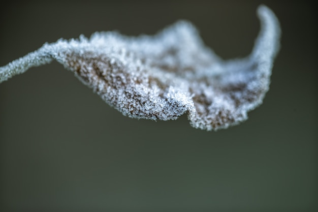 Autumn leaf covered with ice crystals. early morning in the cold season.