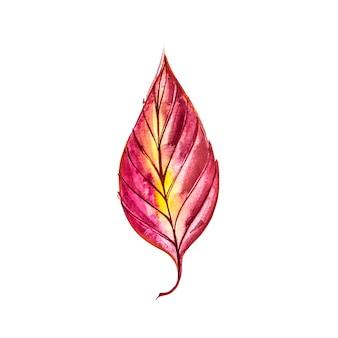 Осенний лист - кизил. осенний кленовый лист изолированы. акварельные иллюстрации