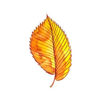 Осенний лист - вяз. осенний кленовый лист изолированы. акварельные иллюстрации