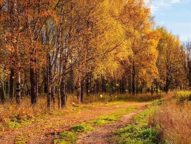 紅葉。落ち葉のある日当たりの良い秋の公園の小道。カエデと白樺の森を通る田舎道。