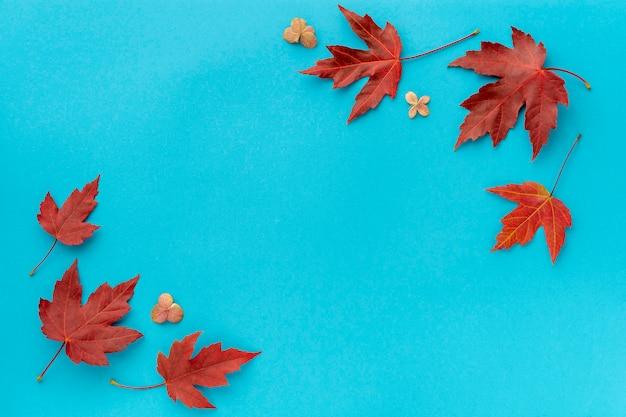 秋の葉フラットレイアウト構成。青い紙の背景に赤いカエデからフレームを残します。秋のコンセプト。秋の葉のデザイン。トップビュー、コピースペース