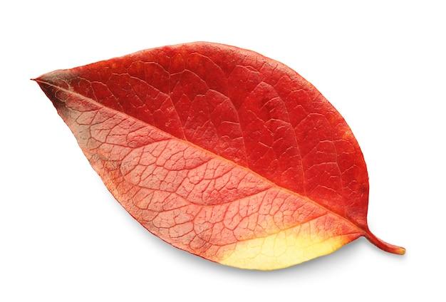 Осенний лист, изолированные на белом фоне с тенями, обтравочный контур для изоляции без теней на белом