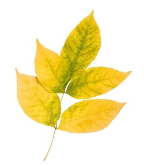 Осенний лист, изолированные на белом фоне