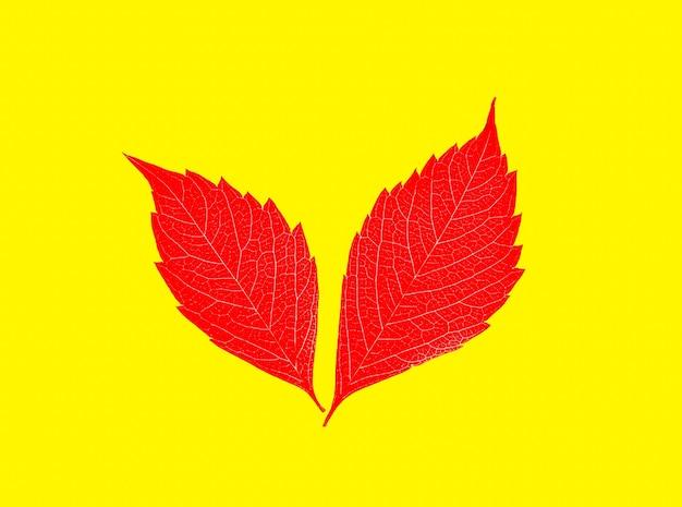 Ledライトランプの上に横たわる紅葉。季節の写真。