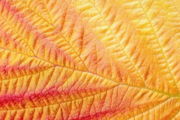 Autumn leaf macro texture and colors in fall season
