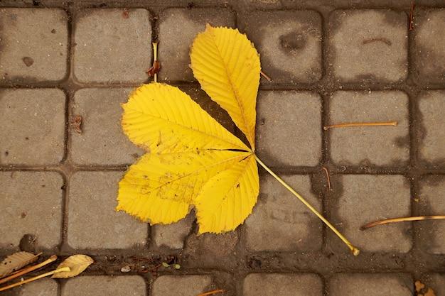 Осенний лист каштана падает на землю