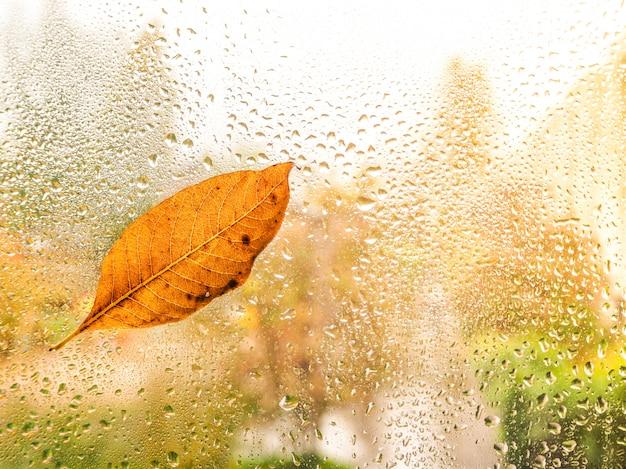 젖은 유리에가 잎입니다. 젖은 유리가 배경.