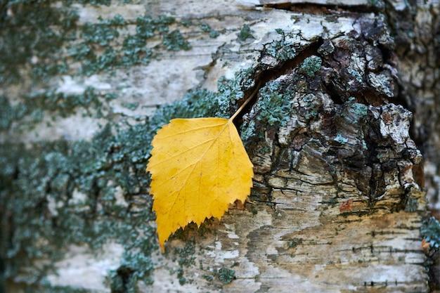 木の幹の紅葉