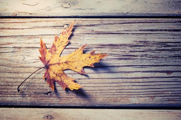 나무에 가을 잎