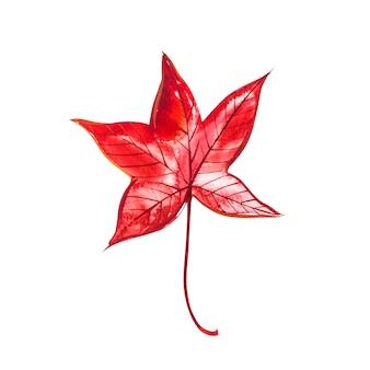 Осенний лист - сладкая камедь. осенний кленовый лист изолированы. акварельные иллюстрации