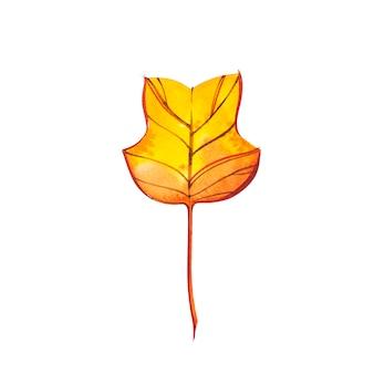 Осенний лист - тюльпанное дерево. осенний кленовый лист изолированы. акварельные иллюстрации