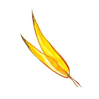 Осенний лист - ива. осенний кленовый лист изолированы. акварельные иллюстрации