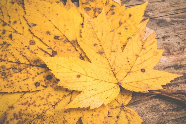 Autumn leaf on wooden background