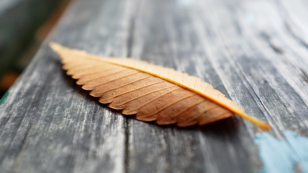 Autumn leaf on a wooden surface in a park