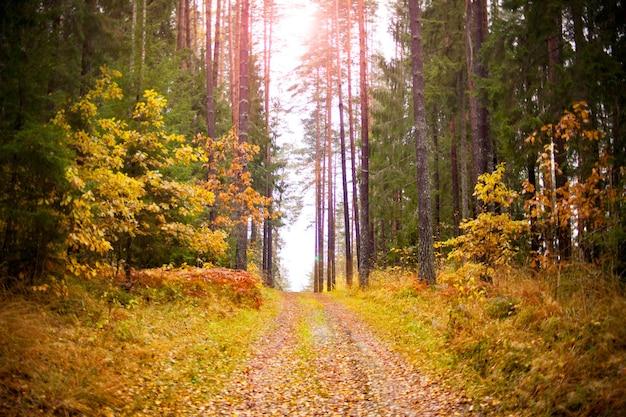 木製の小道に紅葉。エストニアの森の古い縞模様の木製の背景に紅葉