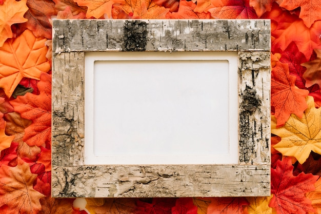 Autumn leave composition with picture frame