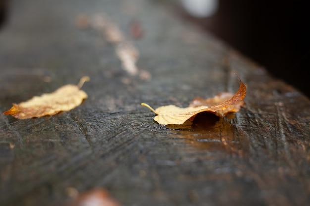 Осенние листья после дождя на столе