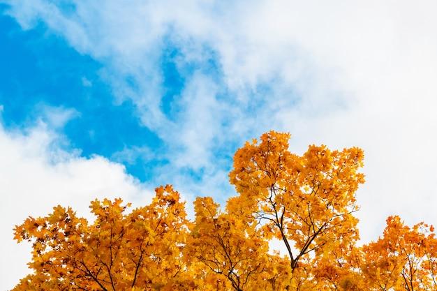 Autumn leaves against blue sky. frame