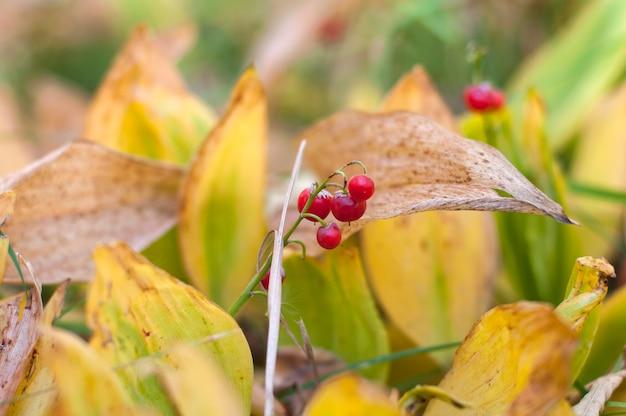 秋の葉と果実。リリー