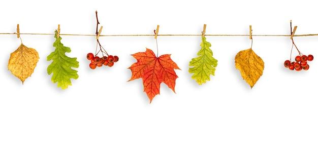 단풍과 산 애쉬의 가지가 꼬기에 매달려, 가을 개념