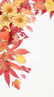 秋の紅葉と白い背景の上の花