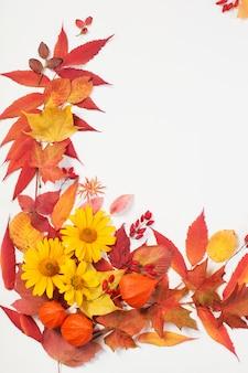 Осенние листья и цветы на белом