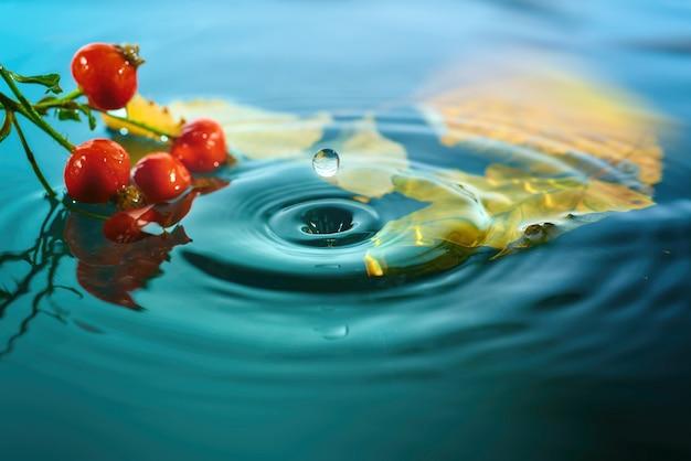 秋の紅葉と波状の水面にローズヒップの果実