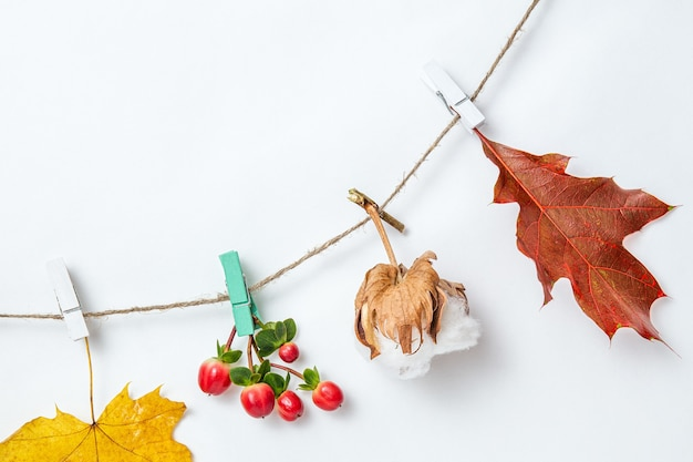Autumn leaves background or banner. maple and oak leaves, cotton box on clothespins on white background. mockup, flat lay, top view, copy space. autumn decorative design element.