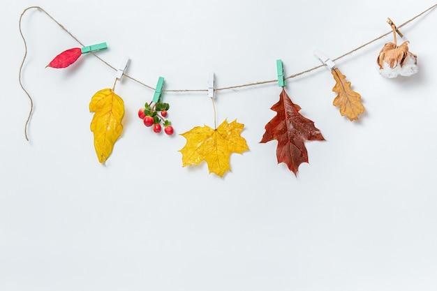 Осенние листья фон или баннер. кленовые и дубовые листья, хлопковая коробка на прищепках на белом фоне. макет, плоская планировка, вид сверху, копия пространства. осенний декоративный элемент дизайна.