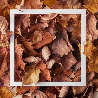 가을은 변화하는 계절을 개념적으로 정사각형 형식으로 단풍 위에 겹쳐진 흰색 직사각형 프레임이 있는 배경을 남깁니다.