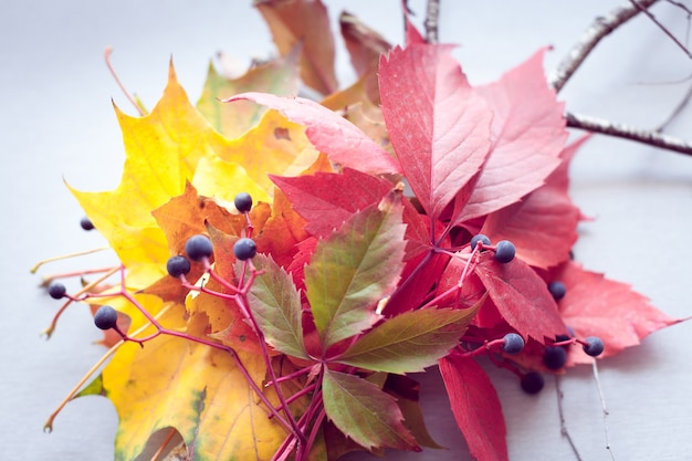 Autumn leaves and berries on a gray background