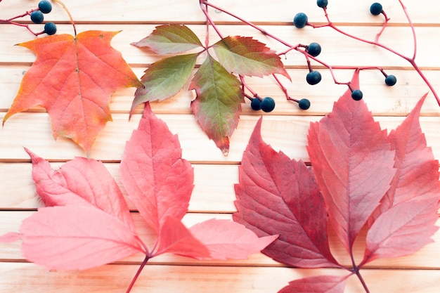 Autumn leaves and berries on a wooden background