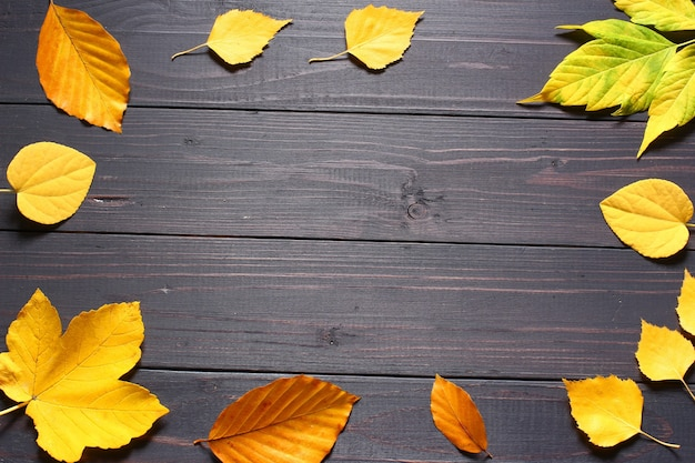 Autumn leaves on a black background copy space