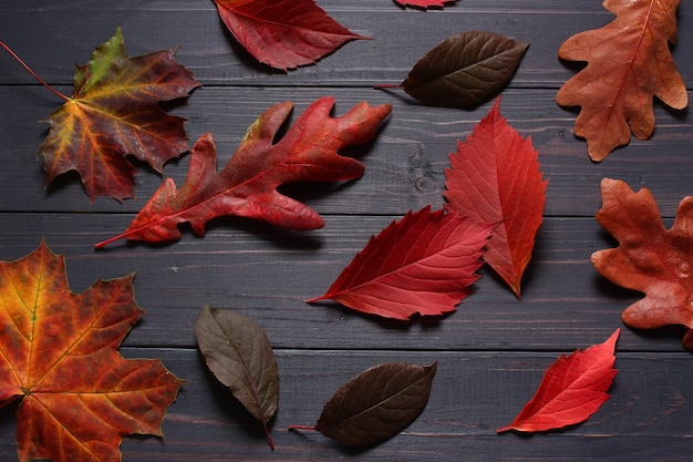 Autumn leaves on a black background