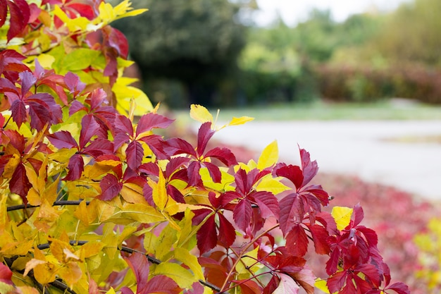 Autumn leaves in a blurred background, red and jelly foliage.