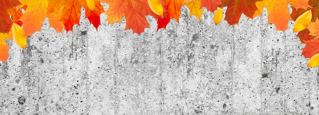Autumn leaves on a cement background with a copy space. banner with yellow and red maple leaves.