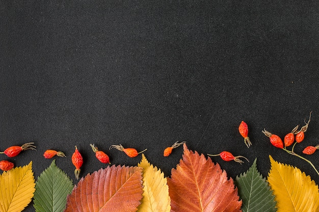 Autumn leaves on a chalkboard