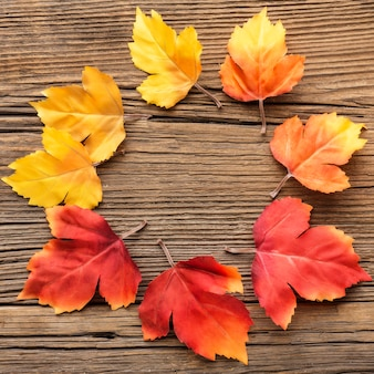 Autumn leaves in circle shape