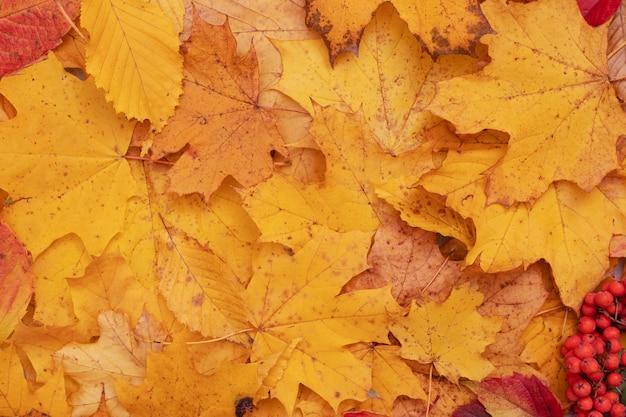 Осенние листья опали с клена и рябины. осенний естественный фон