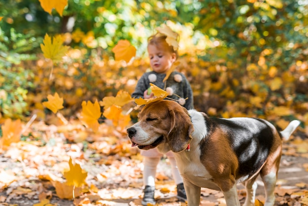 Autumn leaves falling on beagle dog and girl in forest