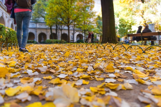 Autumn leaves in the floor