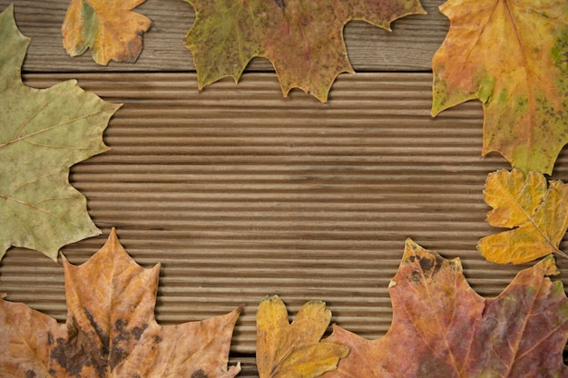 Autumn leaves frame over wooden background.