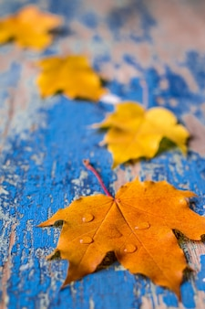 Autumn leaves on the grunge wooden cyan desk.