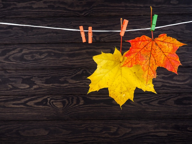 Autumn leaves hanged on the clothesline on wood