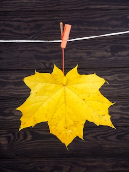 Autumn leaves hanged on the clothesline on wood