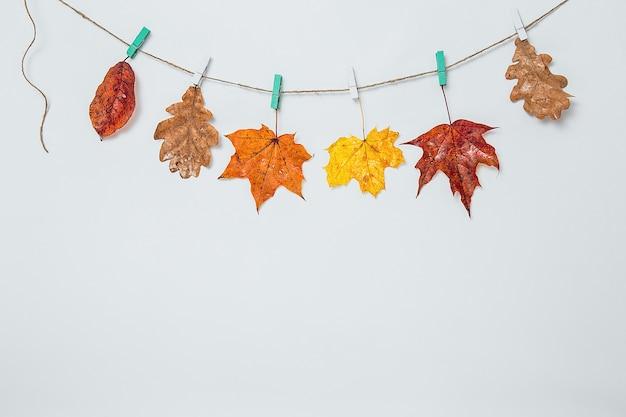 物干しに掛かっている紅葉。新鮮なオーク、カエデ、ナナカマドの葉がクリップでひもにぶら下がっています。カラフルな紅葉-黄色、オレンジ、赤。コピースペース、フラットレイ。