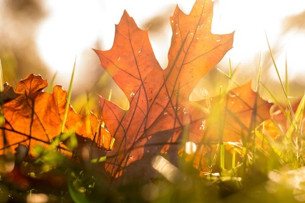 Осенние листья в траве, осенние листья падают